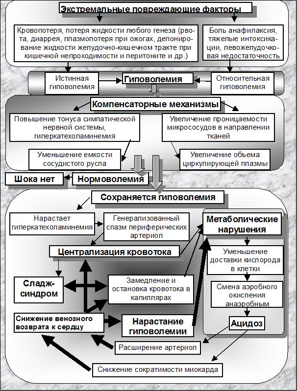 схема патогенеза шока[2]