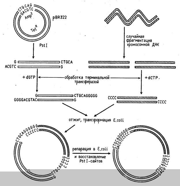 ДНК Рекомбинантная фото