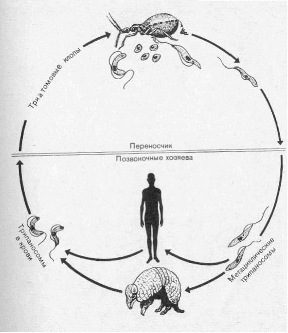 Рис № Жизненный цикл