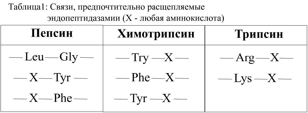 Трипсиноген фото